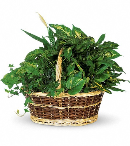 Basket Garden - Large