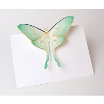 Luna moth pop up card uwp