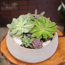 Succulent Garden B by Green Hills Florist