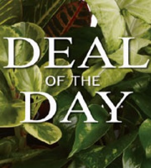 *Deal of the Day - Plants